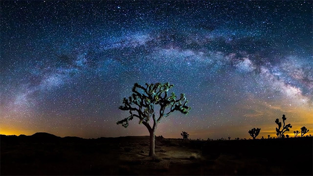 img-tree-consciousness