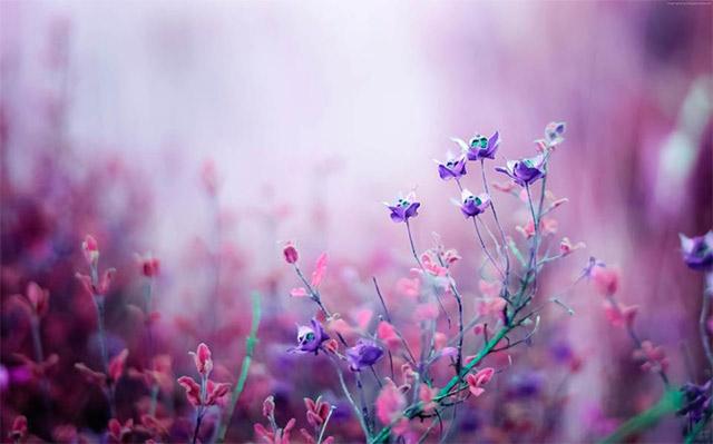img-flowers-presence