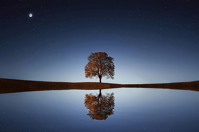 img-tree-reflection