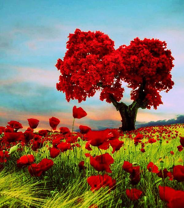 img-love-tree2