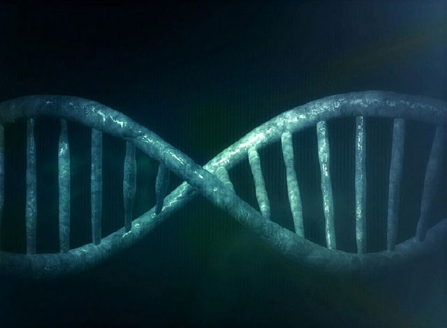 Hundreds-of-genes-are-still-active-until-two-days-after-death2