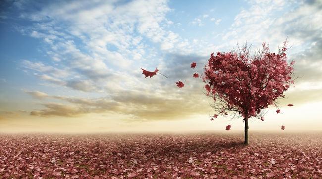 img_love_tree