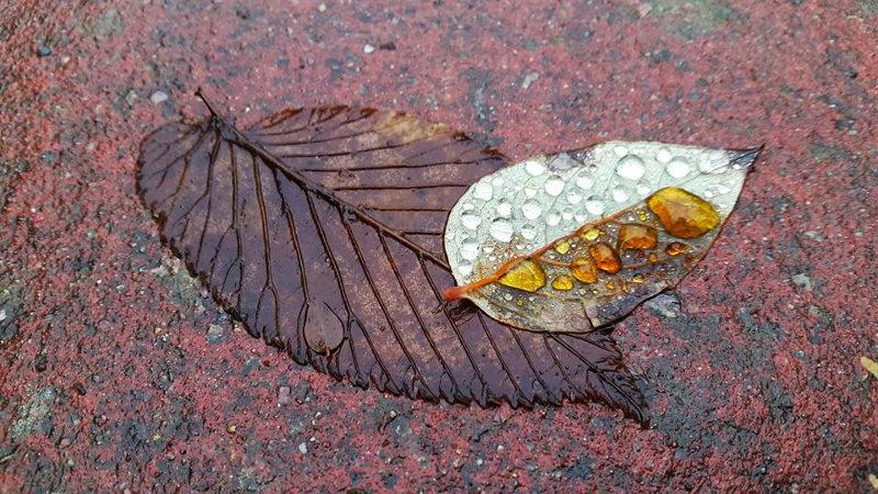 leaf_reconciling
