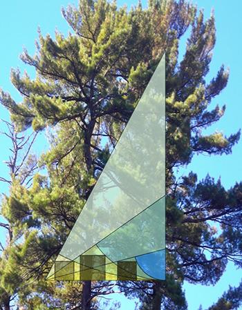 31-tree-geometry